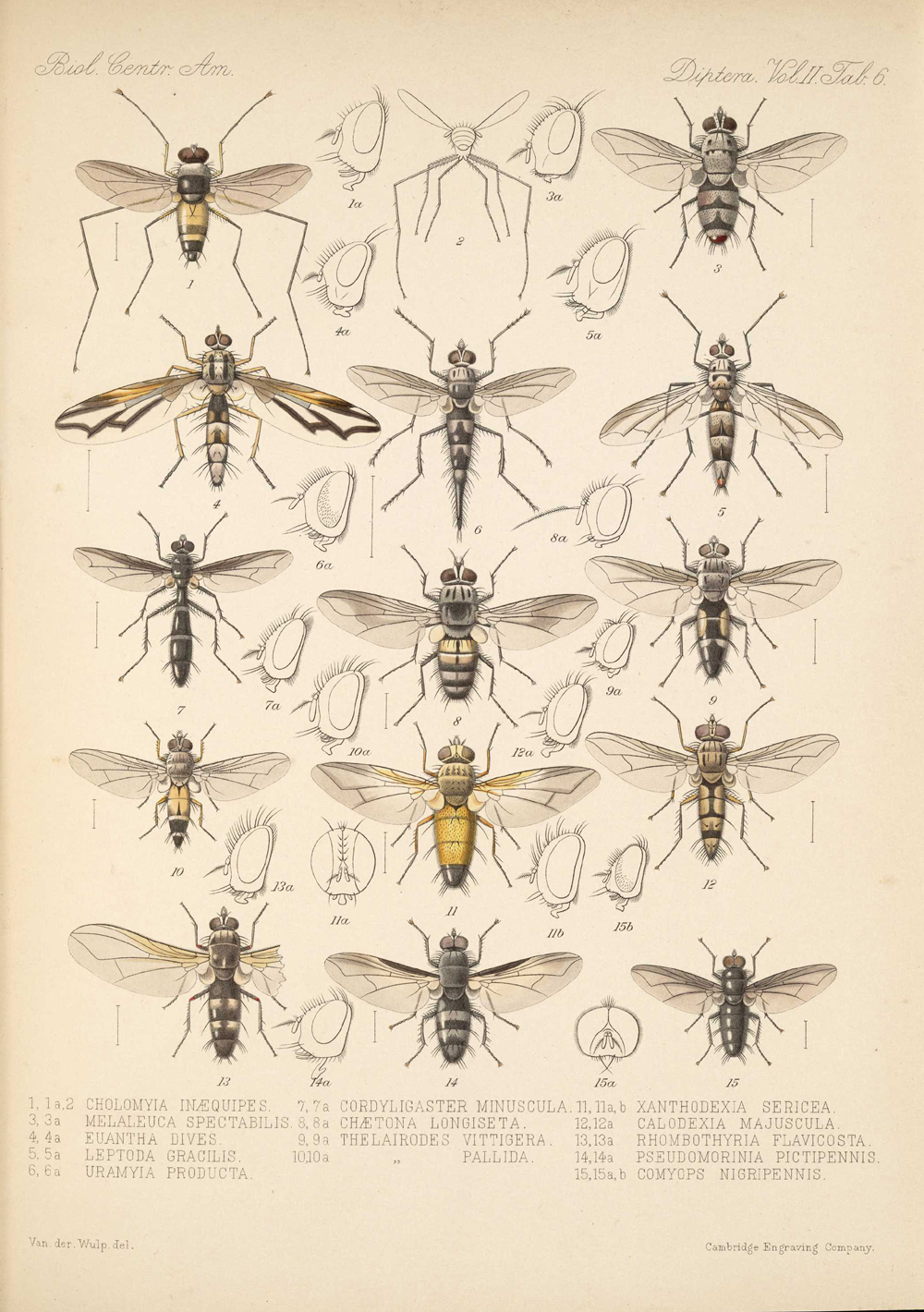 Other Insects,  Image number:bca_16_02_00_523