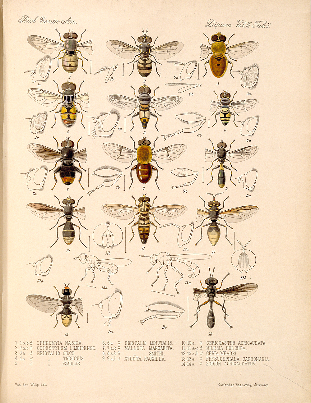 Other Insects,  Image number:bca_16_03_00_141