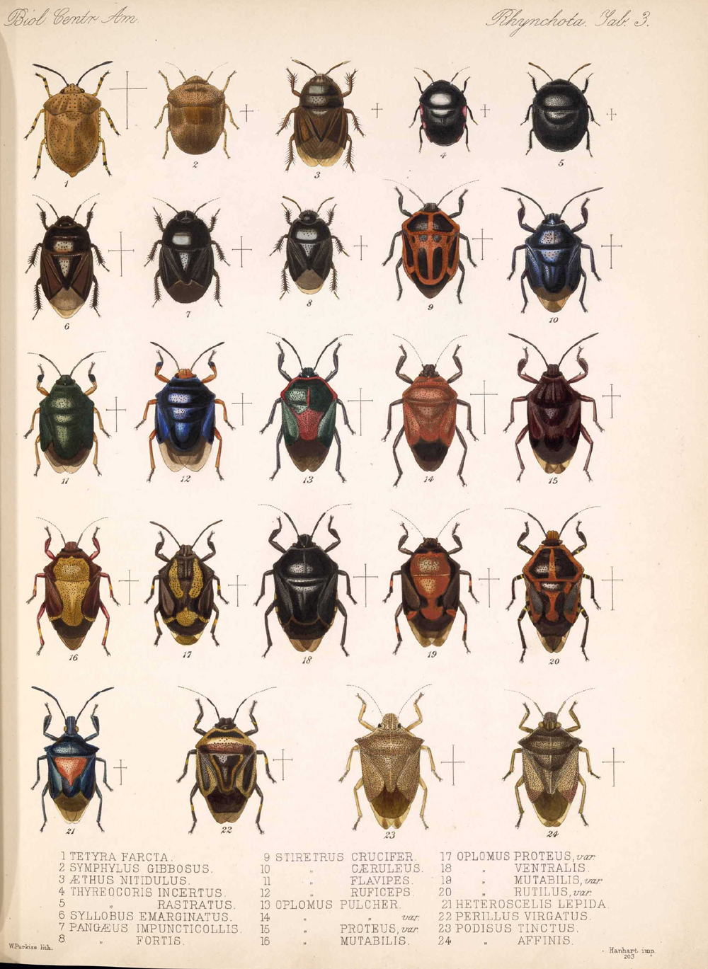 Other Insects,  Image number:bca_17_01_00_491