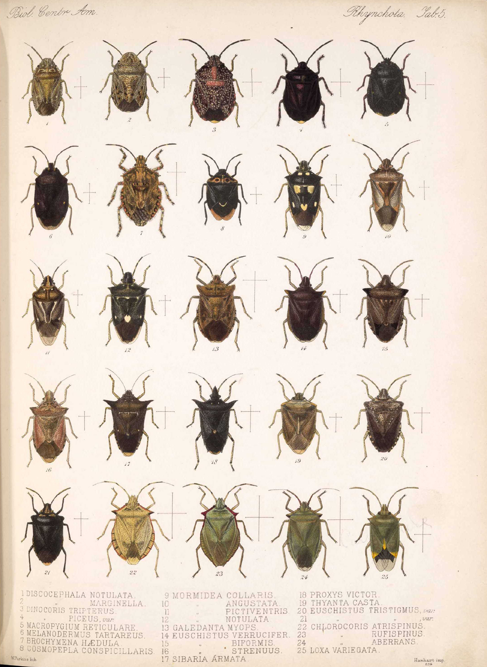 Other Insects,  Image number:bca_17_01_00_493