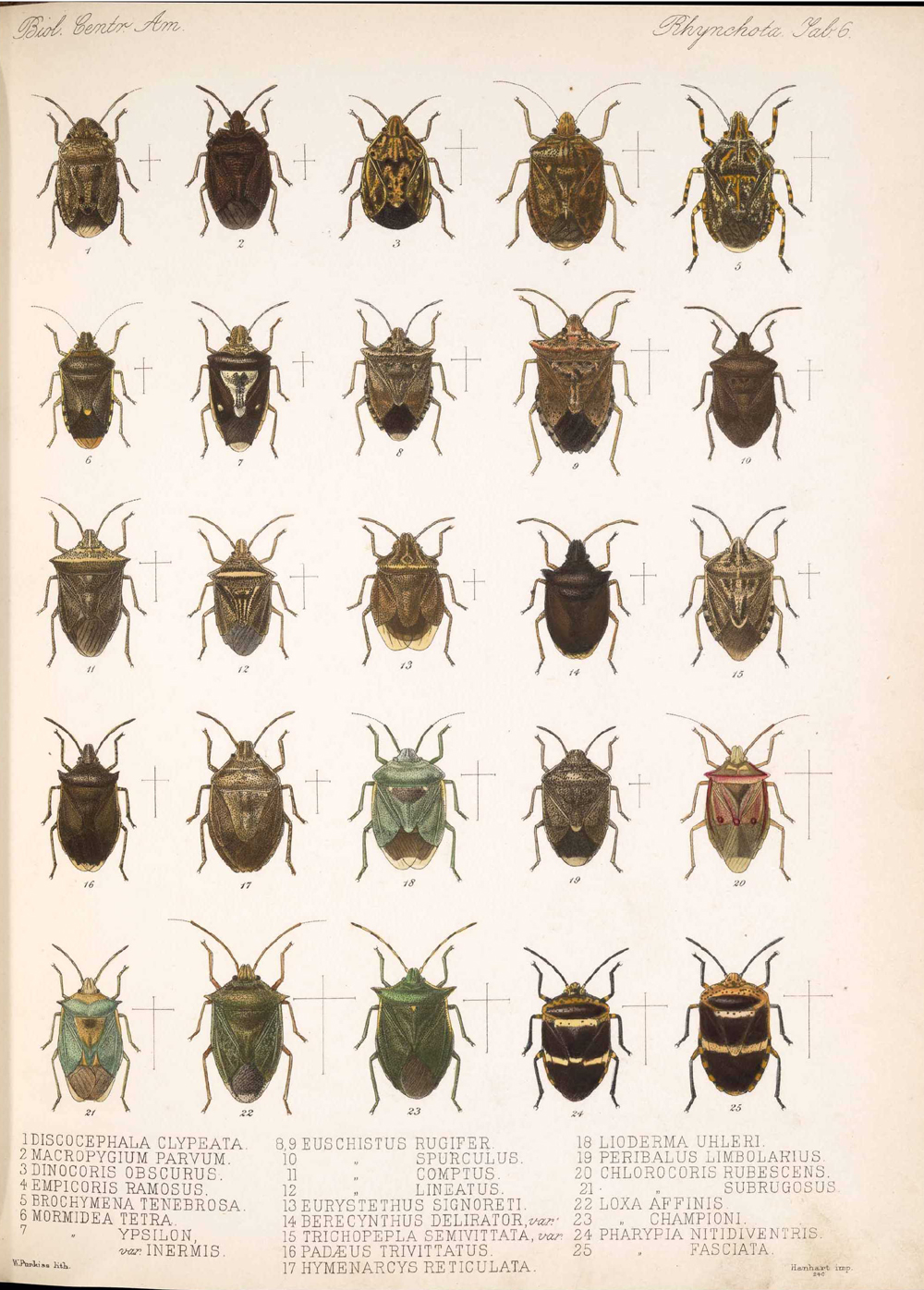 Other Insects,  Image number:bca_17_01_00_494