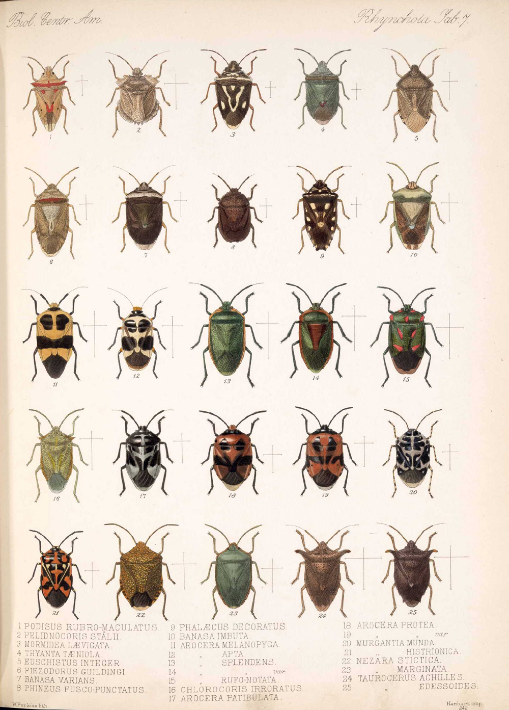 Other Insects,  Image number:bca_17_01_00_495