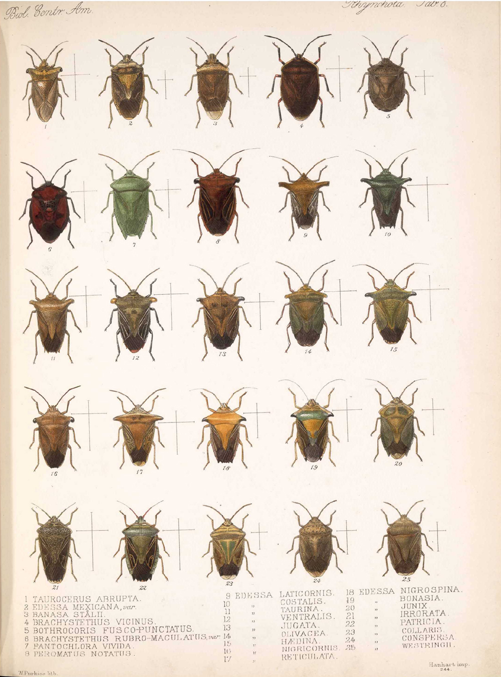 Other Insects,  Image number:bca_17_01_00_496