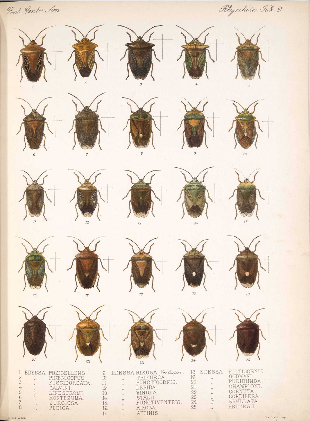 Other Insects,  Image number:bca_17_01_00_497