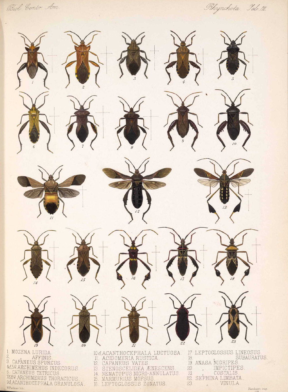 Other Insects,  Image number:bca_17_01_00_500