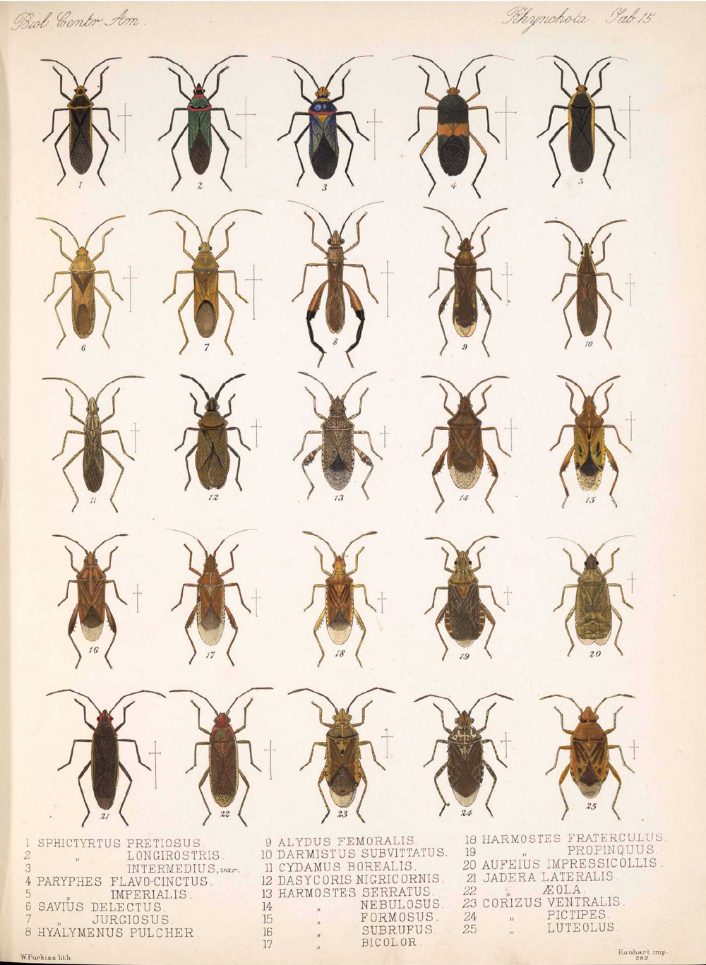 Other Insects,  Image number:bca_17_01_00_503