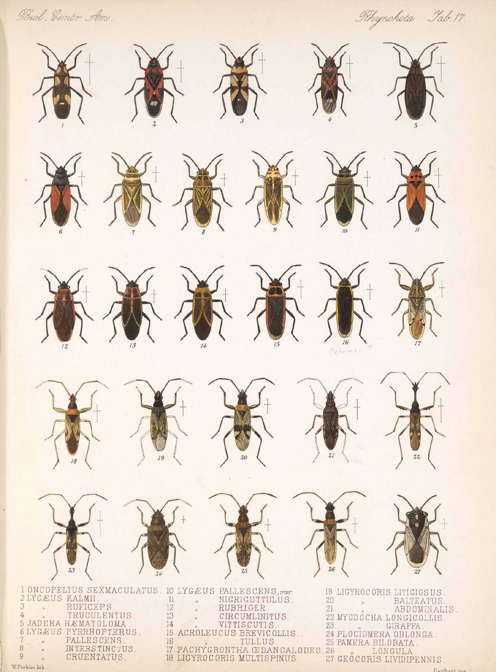 Other Insects,  Image number:bca_17_01_00_505