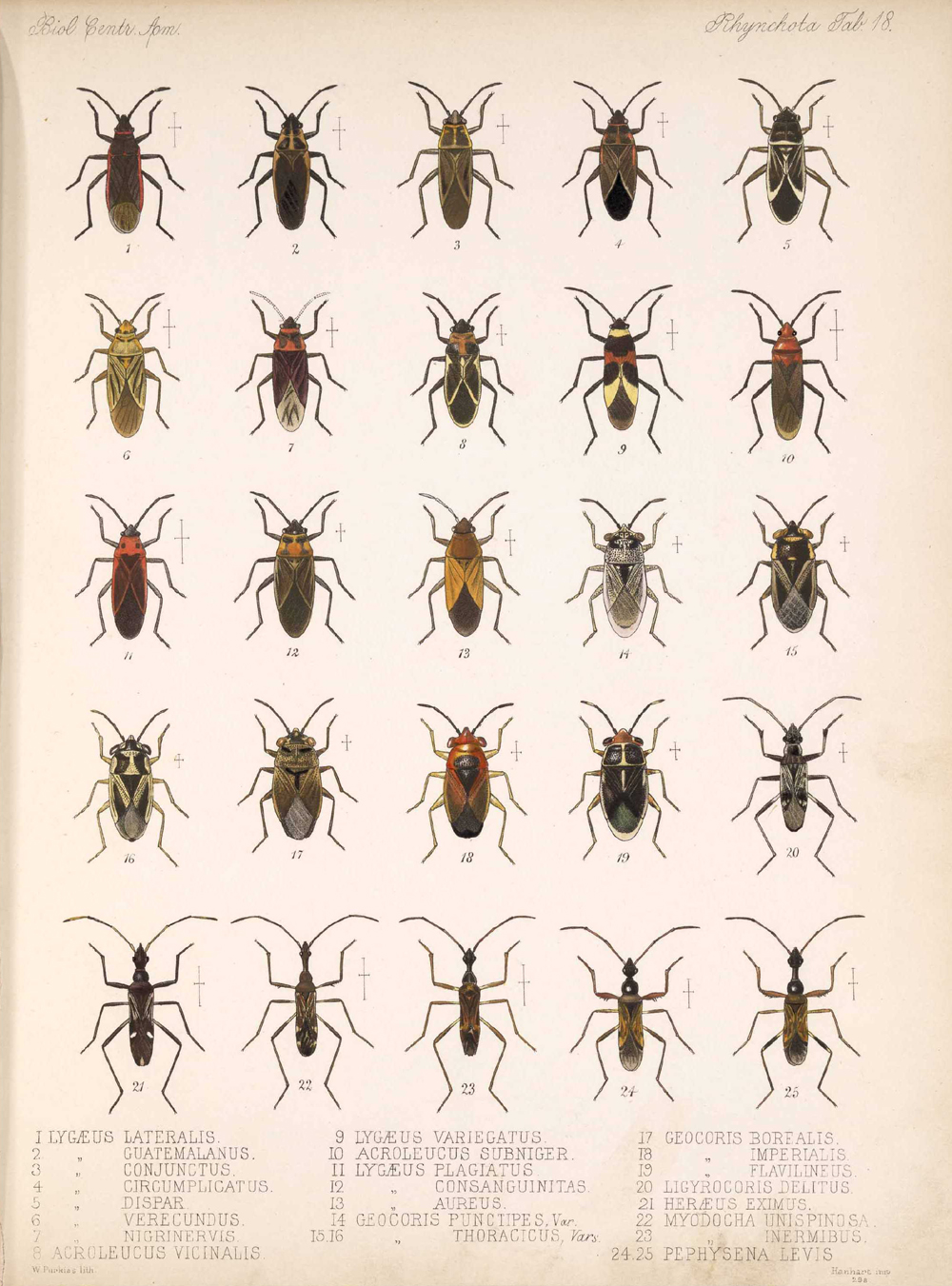 Other Insects,  Image number:bca_17_01_00_506