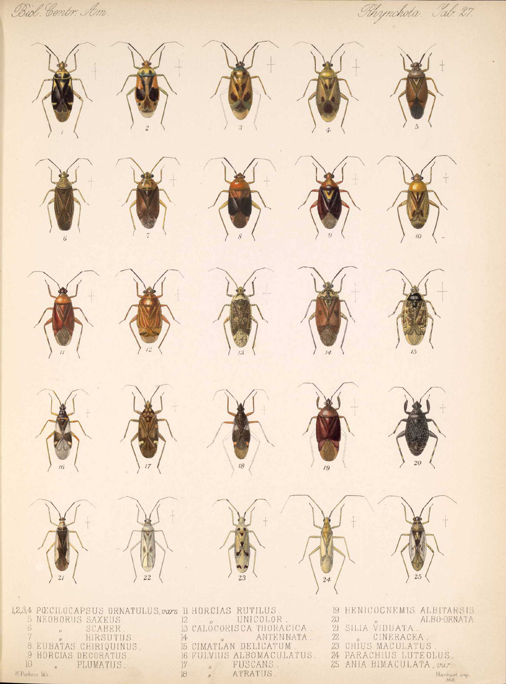 Other Insects,  Image number:bca_17_01_00_515
