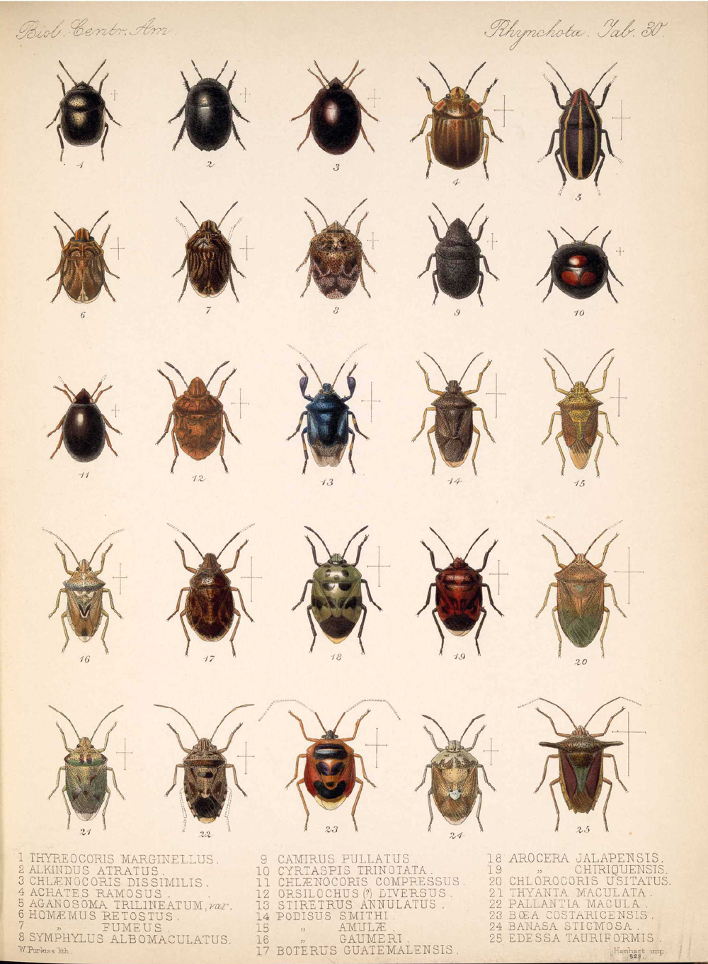 Other Insects,  Image number:bca_17_01_00_518