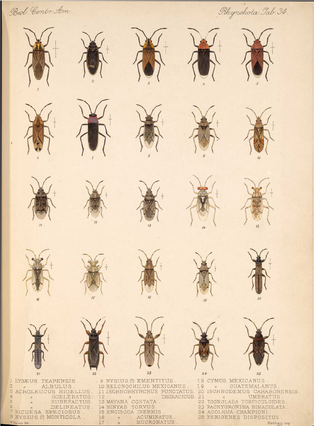 Other Insects,  Image number:bca_17_01_00_522