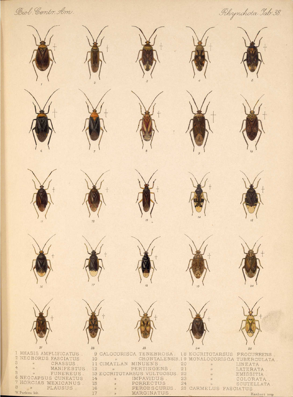Other Insects,  Image number:bca_17_01_00_526