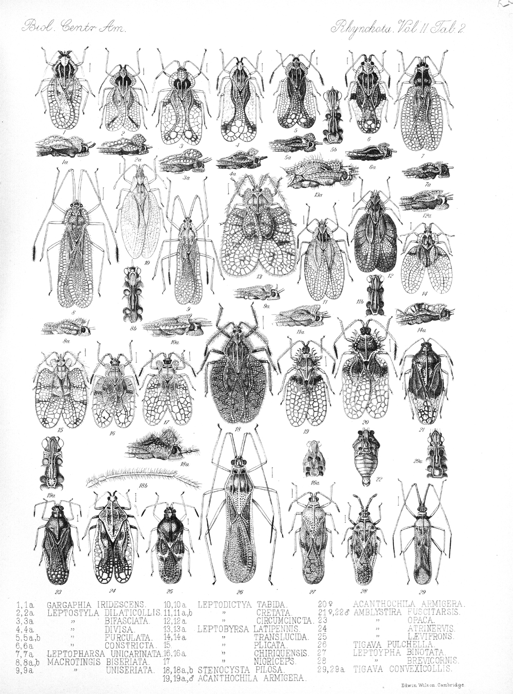 Other Insects,  Image number:bca_17_02_00_438