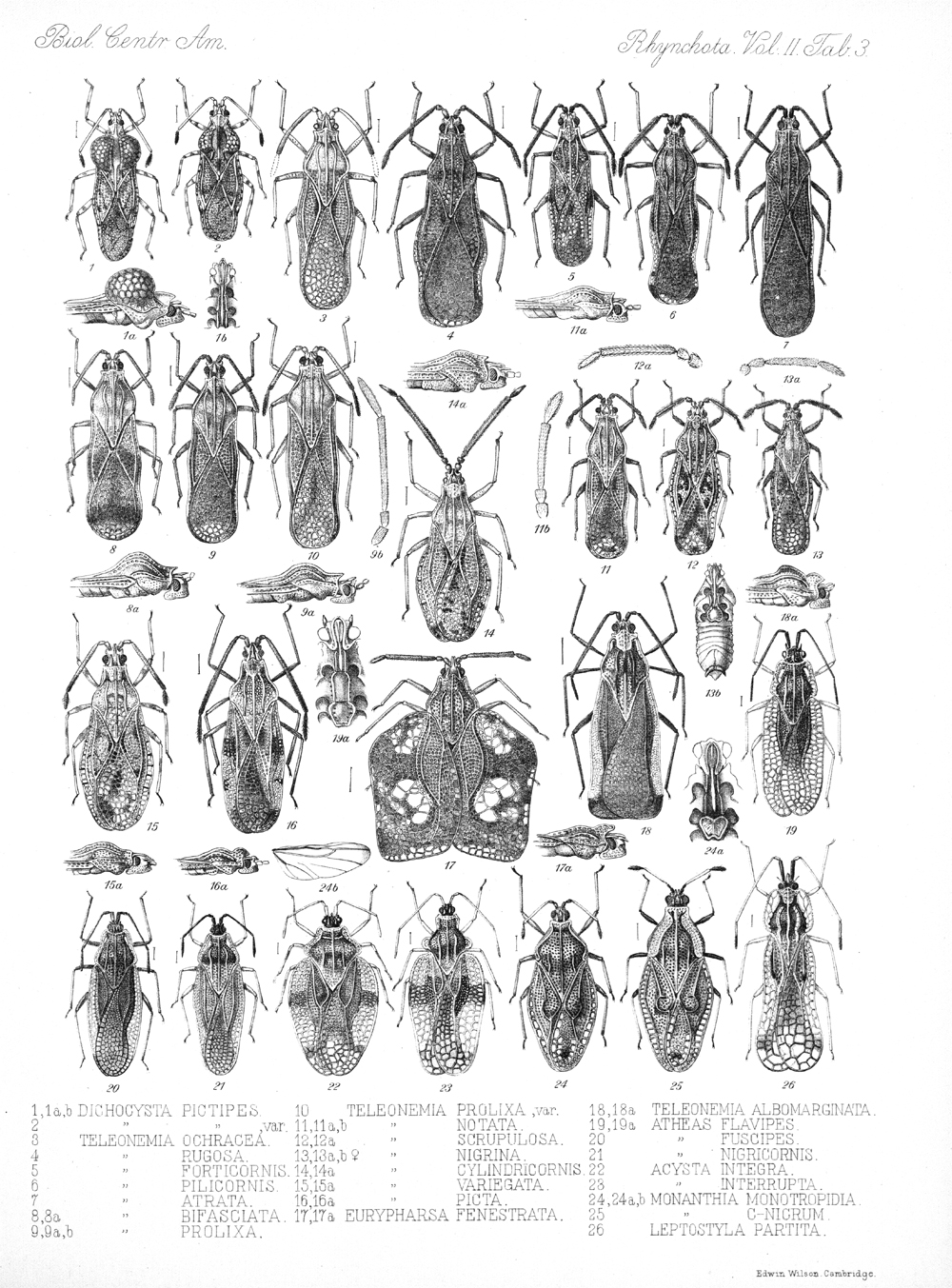 Other Insects,  Image number:bca_17_02_00_439