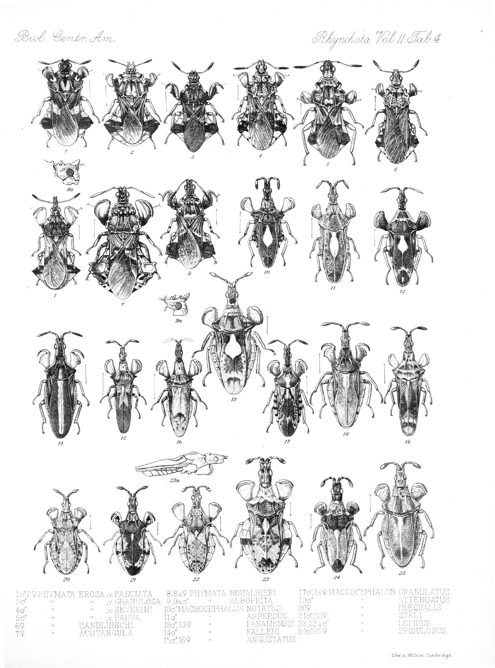 Other Insects,  Image number:bca_17_02_00_440