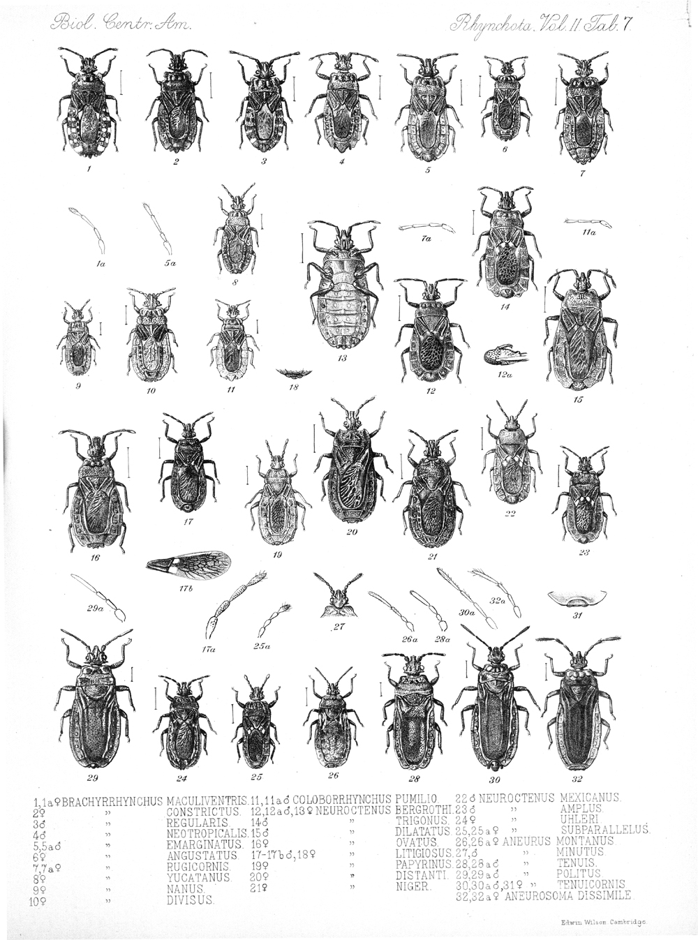 Other Insects,  Image number:bca_17_02_00_443