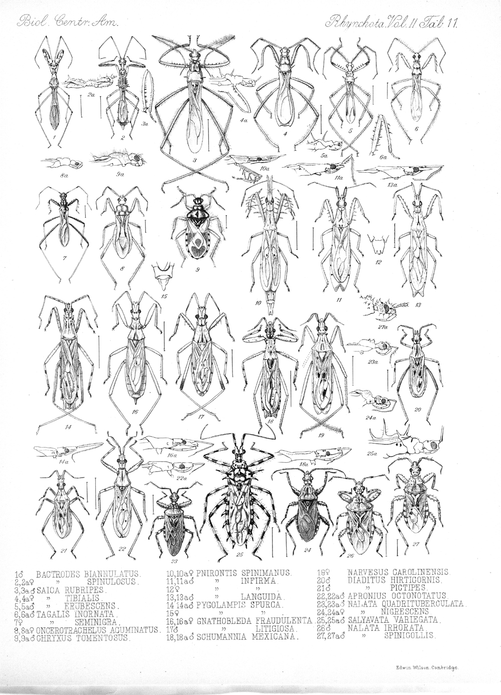 Other Insects,  Image number:bca_17_02_00_447