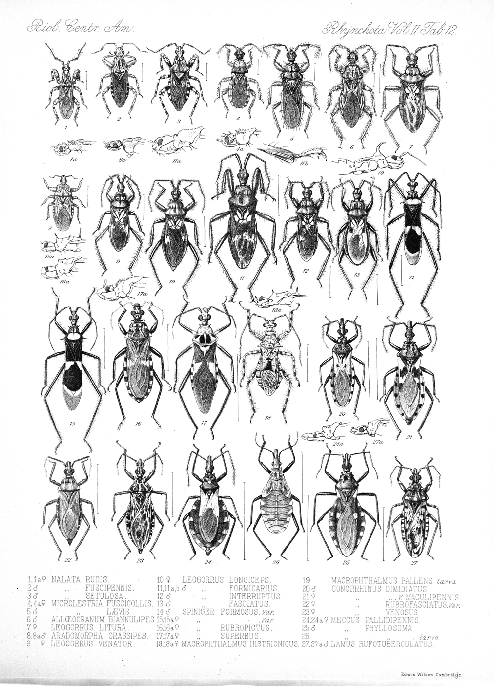 Other Insects,  Image number:bca_17_02_00_448