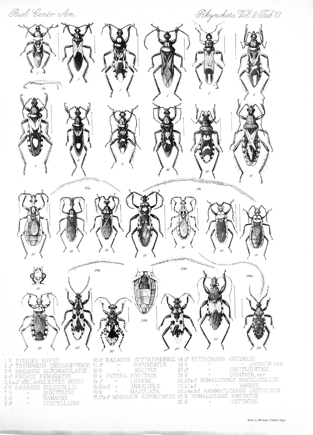 Other Insects,  Image number:bca_17_02_00_449