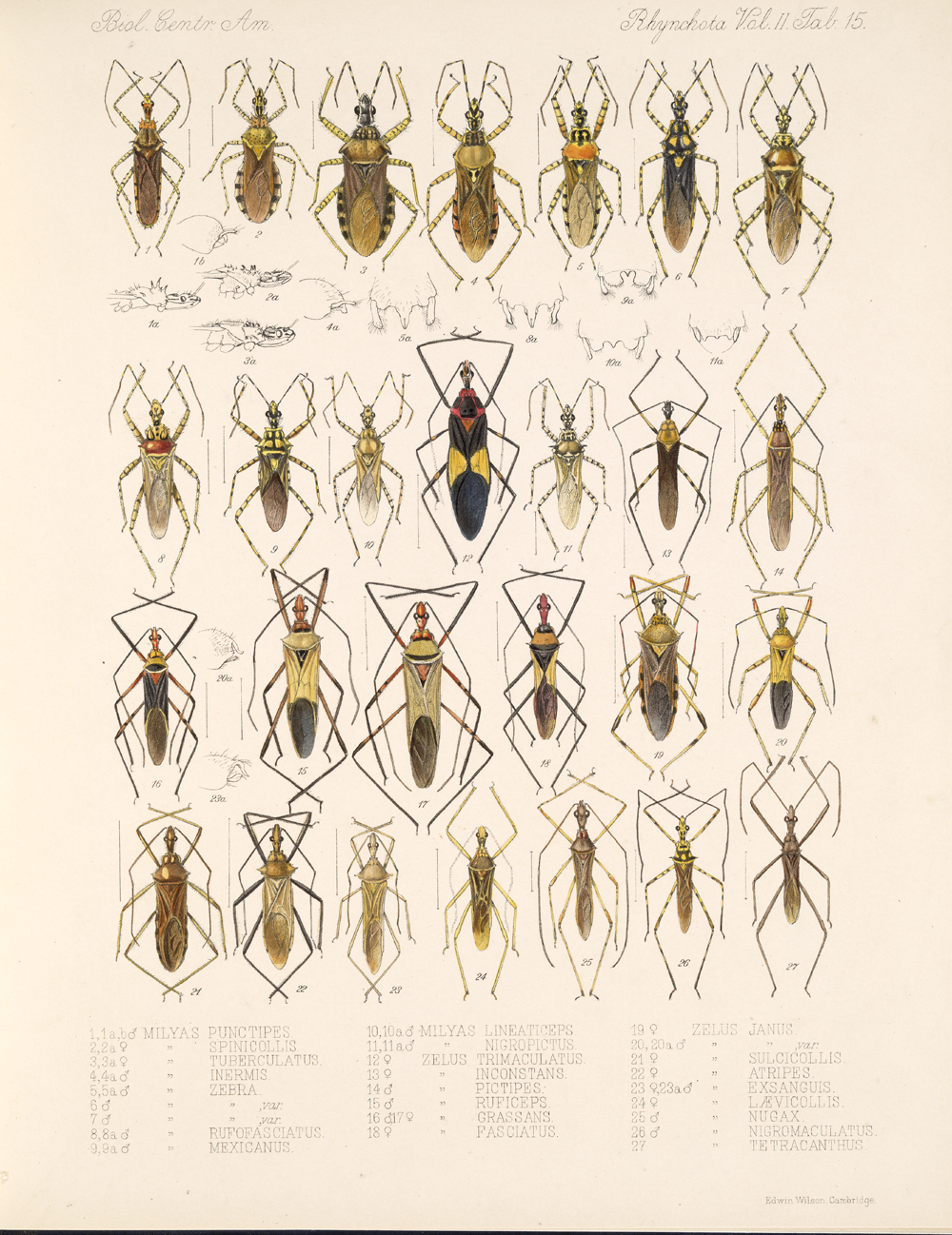 Other Insects,  Image number:bca_17_02_00_451