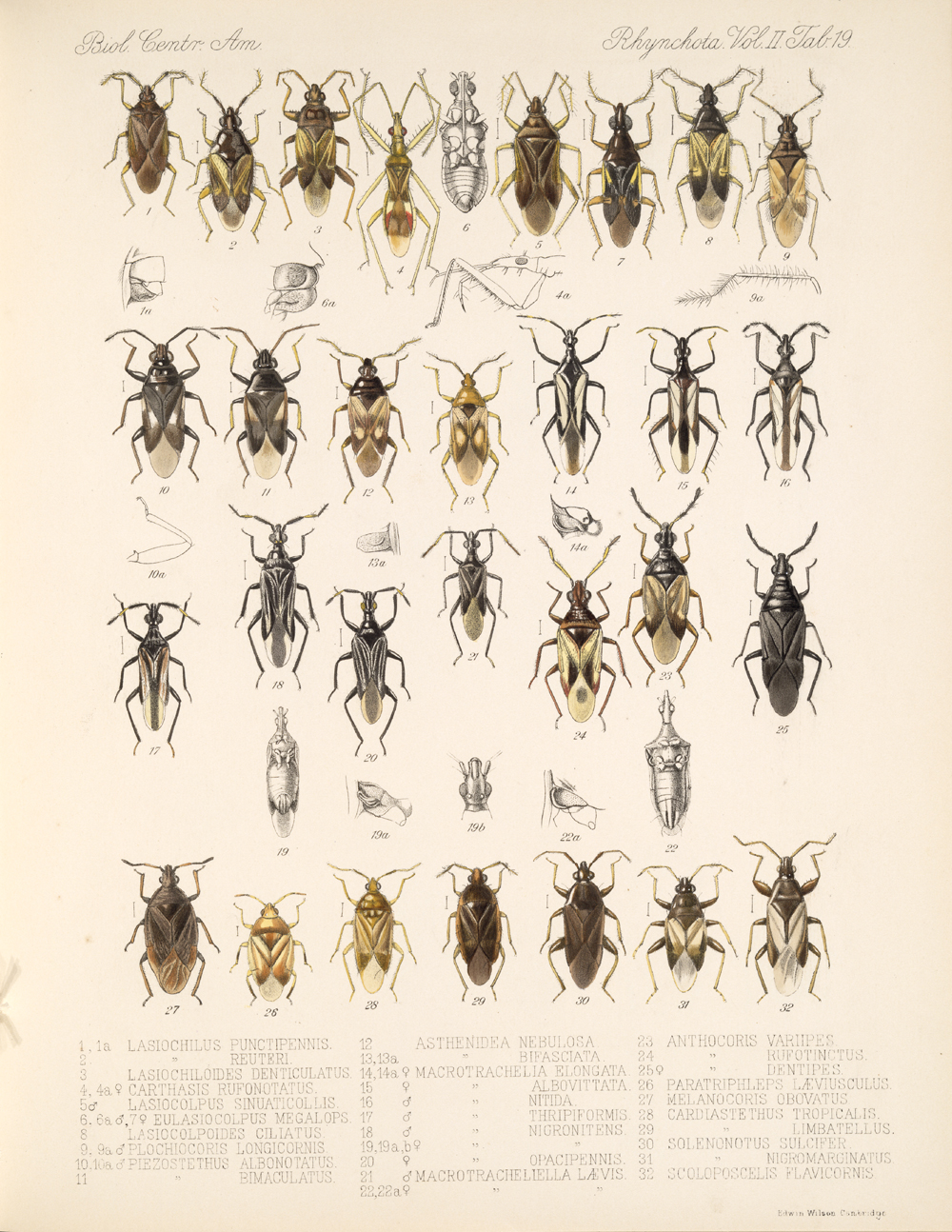 Other Insects,  Image number:bca_17_02_00_455