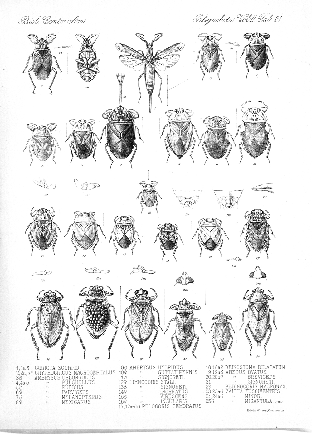 Other Insects,  Image number:bca_17_02_00_457