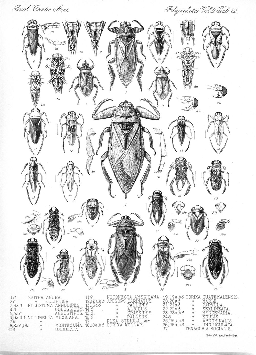 Other Insects,  Image number:bca_17_02_00_458
