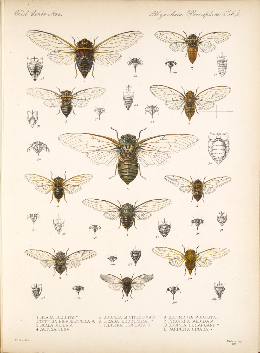 Other Insects,  Image number:bca_18_01_00_168