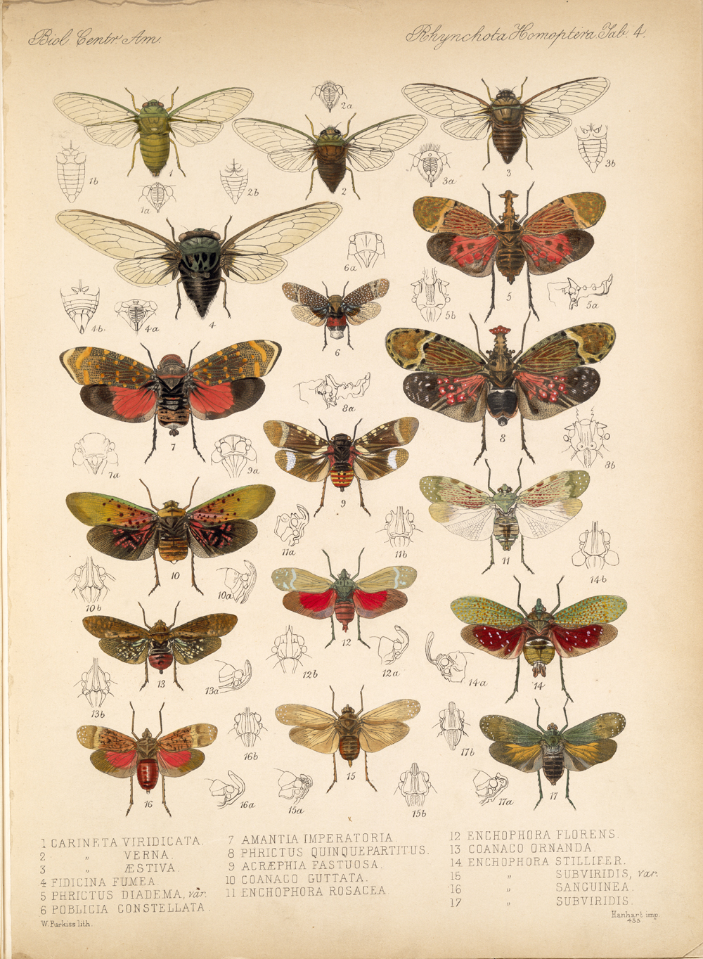 Other Insects,  Image number:bca_18_01_00_169