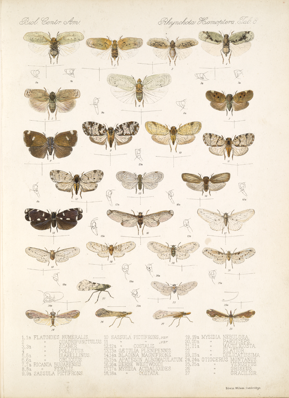 Other Insects,  Image number:bca_18_01_00_173