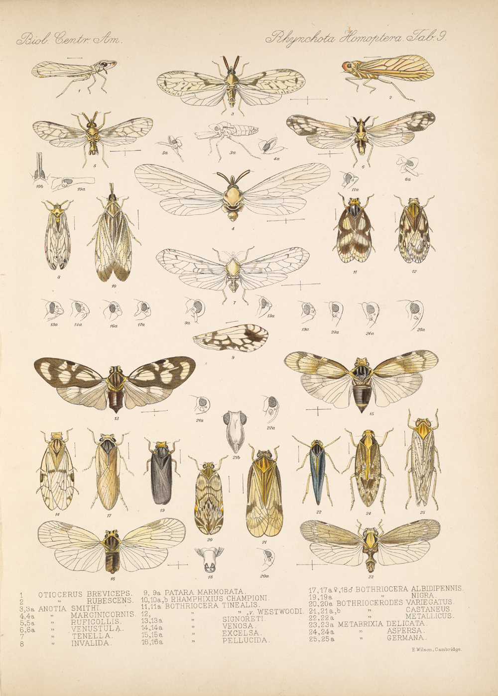 Other Insects,  Image number:bca_18_01_00_174