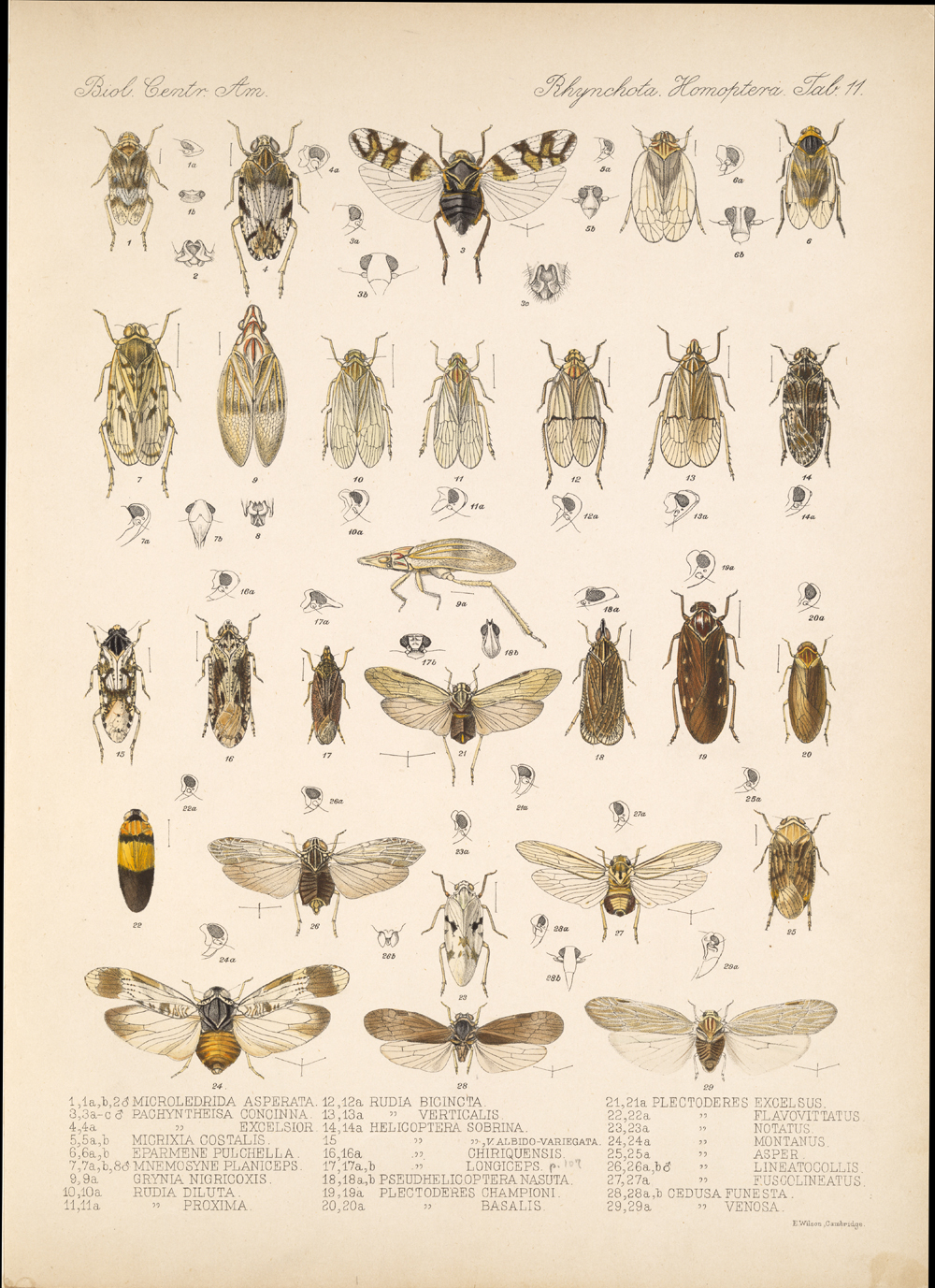 Other Insects,  Image number:bca_18_01_00_176