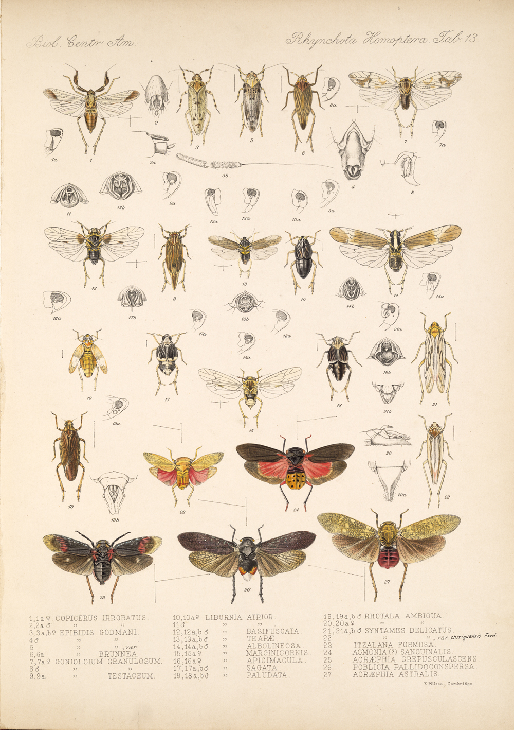 Other Insects,  Image number:bca_18_01_00_178