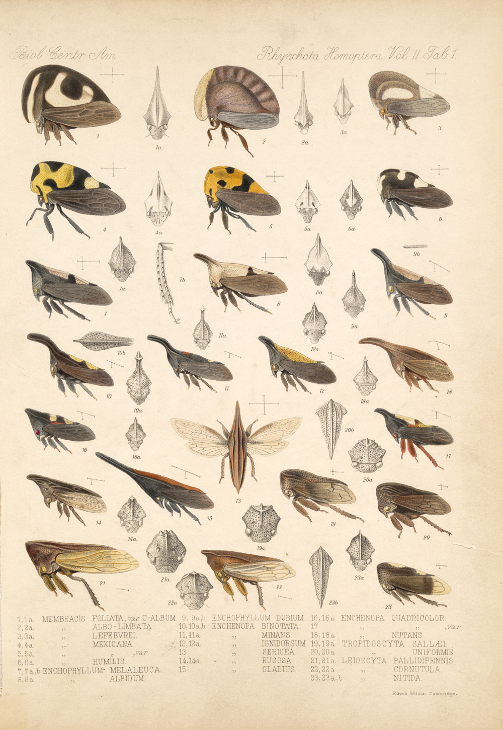 Other Insects,  Image number:bca_18_02_01_359