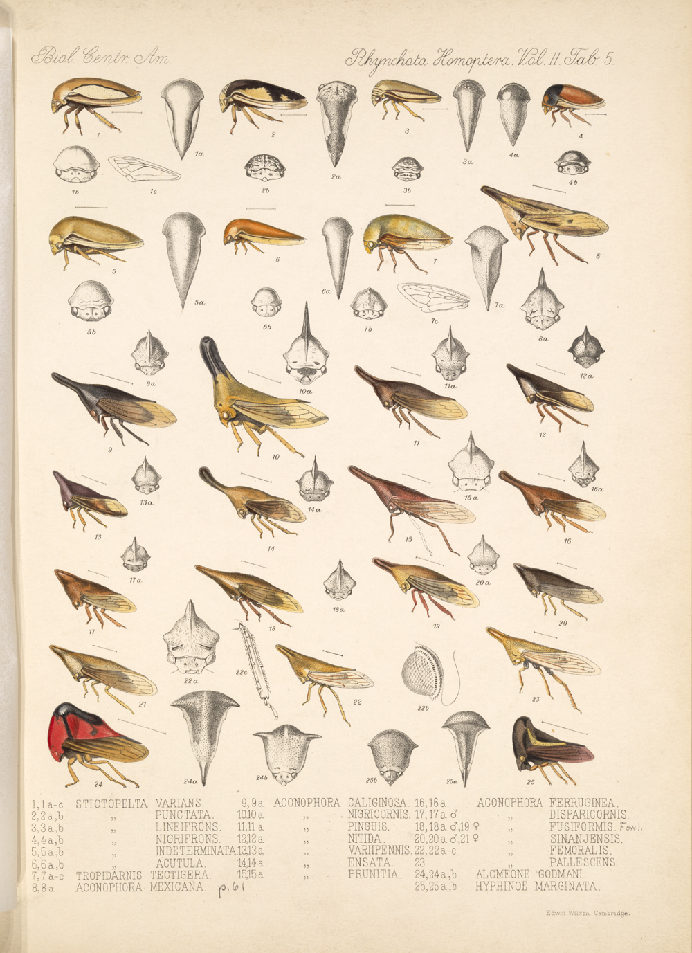 Other Insects,  Image number:bca_18_02_01_363