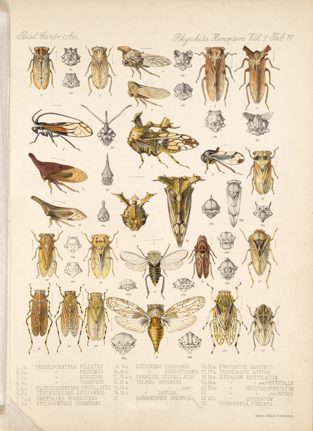 Other Insects,  Image number:bca_18_02_01_368