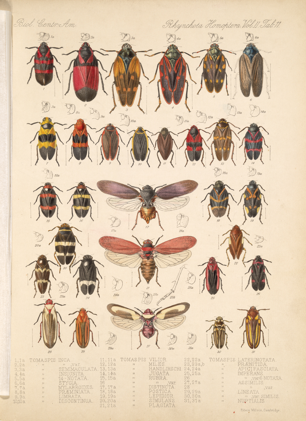 Other Insects,  Image number:bca_18_02_01_369