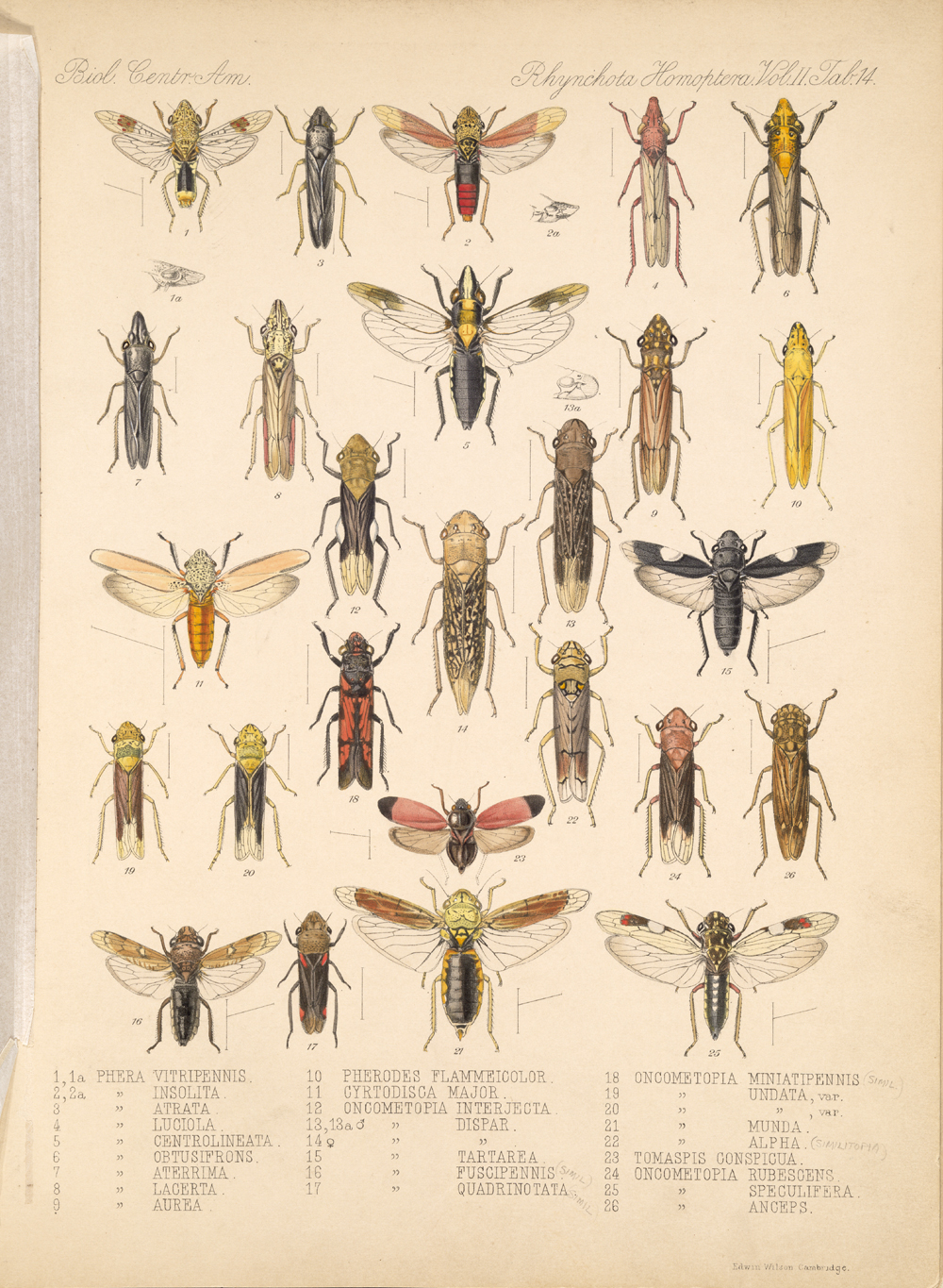 Other Insects,  Image number:bca_18_02_01_372