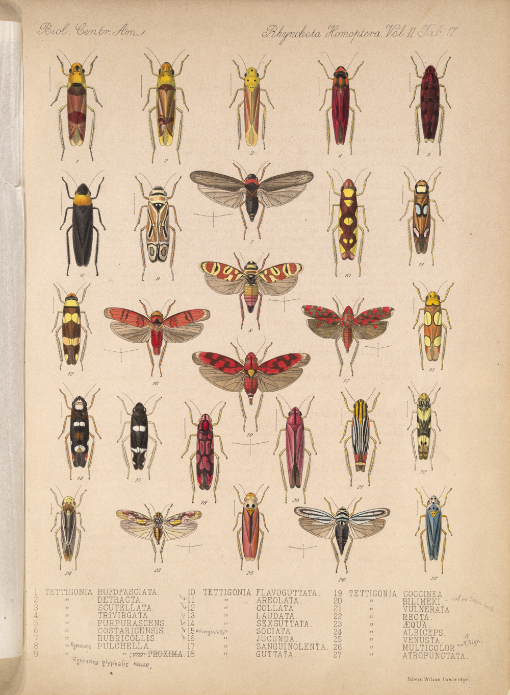 Other Insects,  Image number:bca_18_02_01_375
