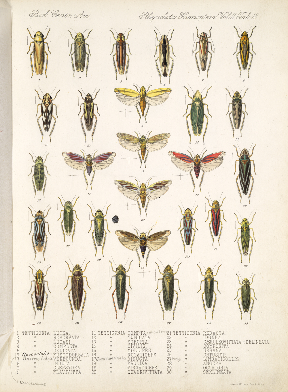 Other Insects,  Image number:bca_18_02_01_376