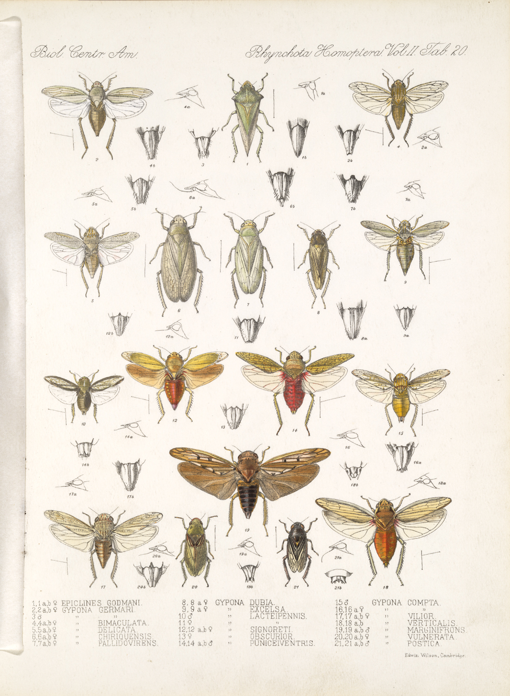 Other Insects,  Image number:bca_18_02_01_379