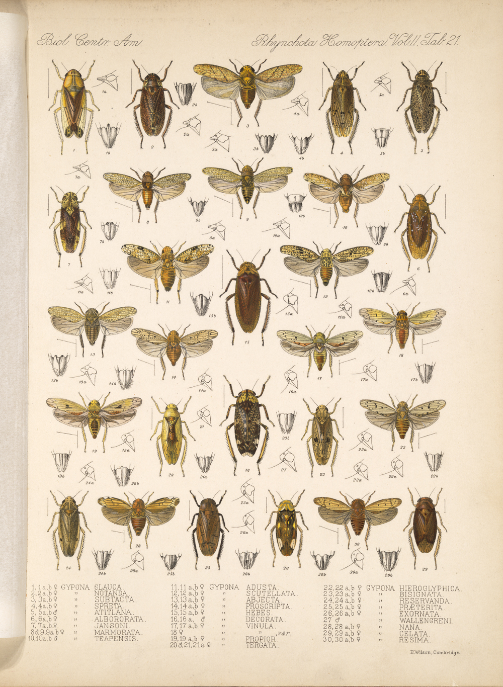 Other Insects,  Image number:bca_18_02_01_380