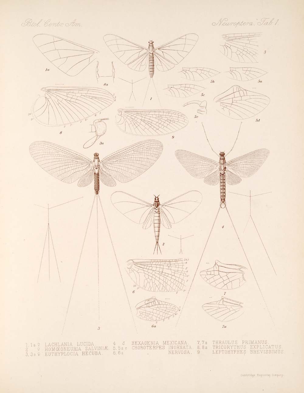 Other Insects,  Image number:bca_19_00_00_461