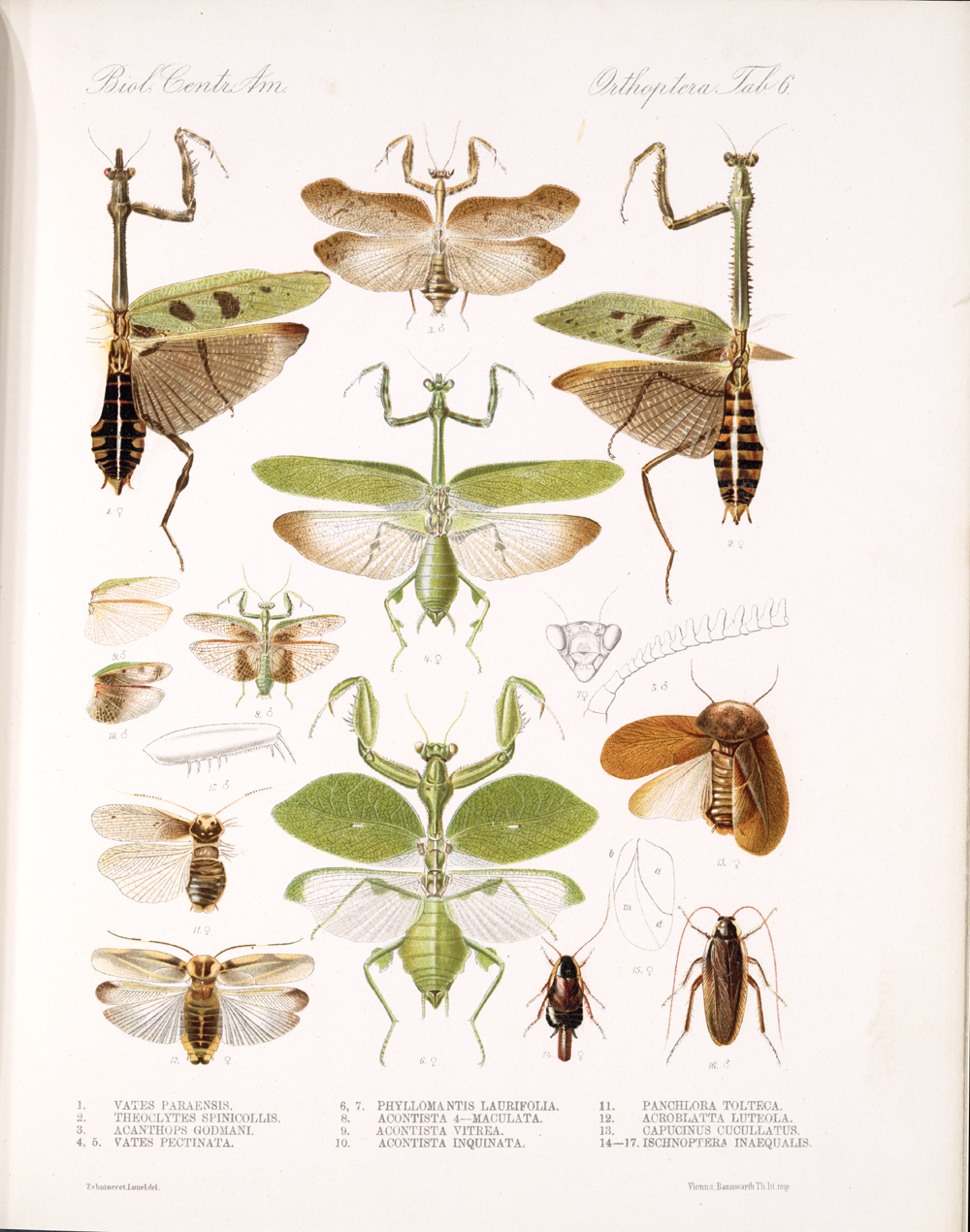 Grasshoppers and Related Insects,  Image number:bca_20_01_00_480