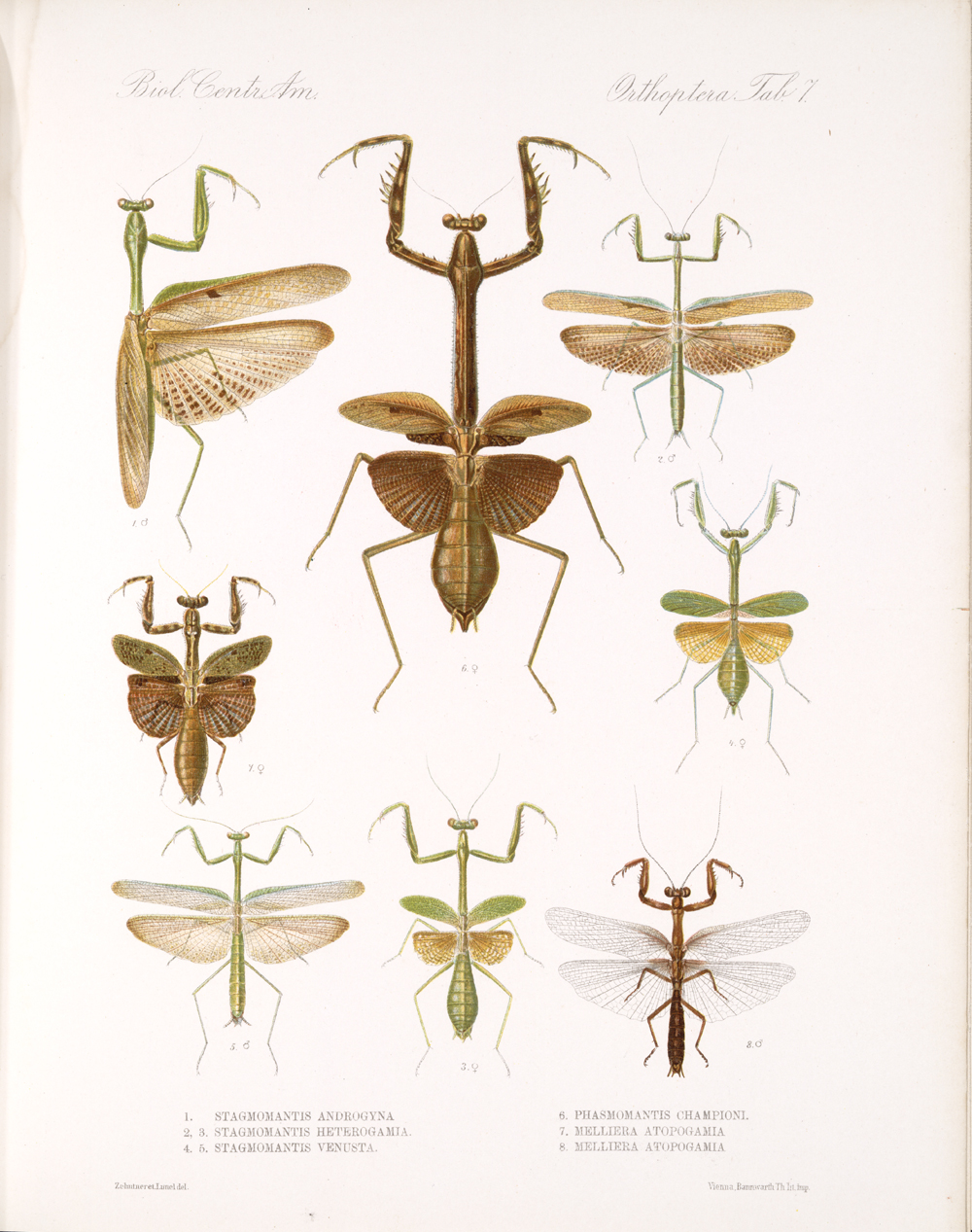 Grasshoppers and Related Insects,  Image number:bca_20_01_00_481