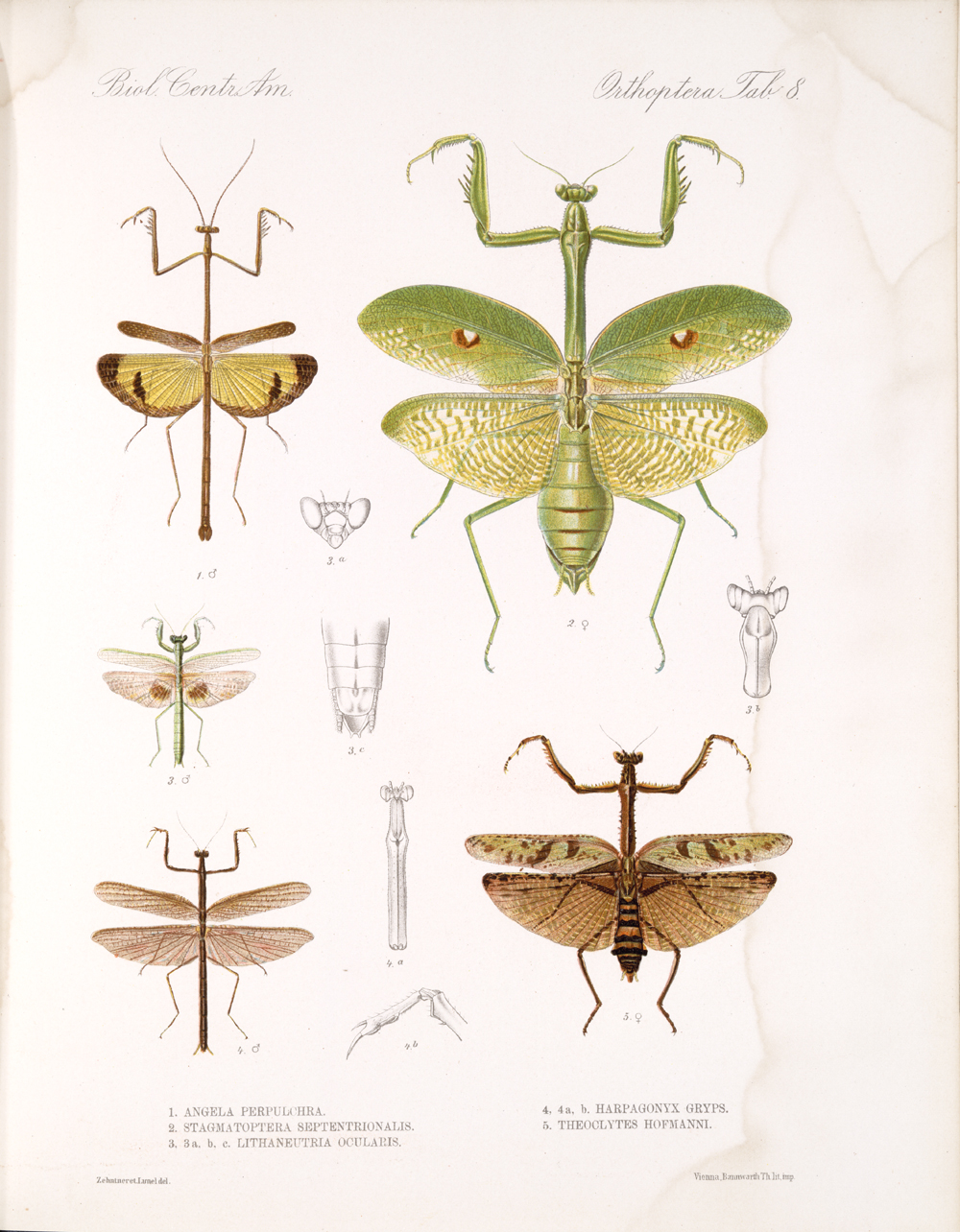 Grasshoppers and Related Insects,  Image number:bca_20_01_00_482