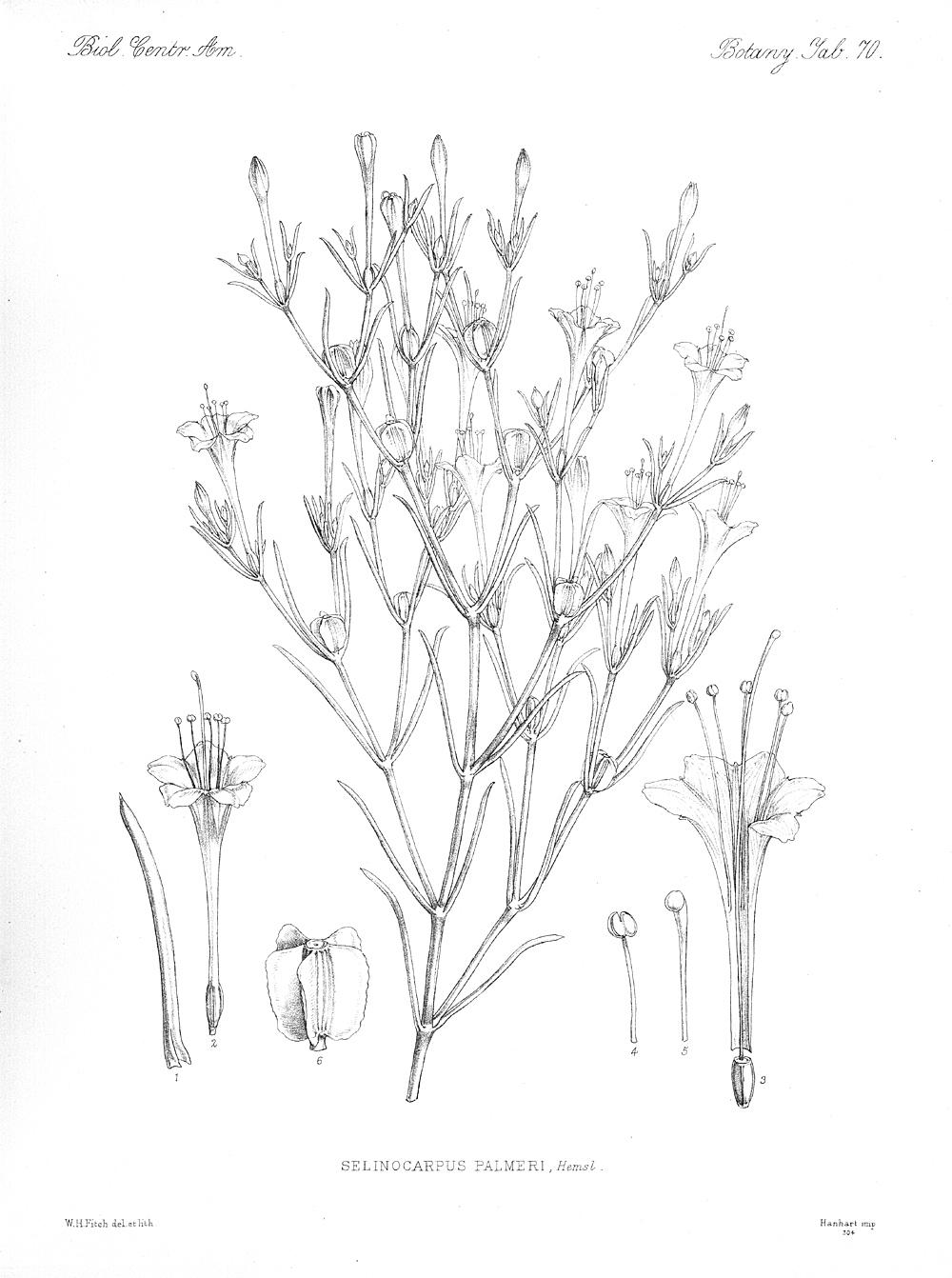 Plants,  Image number:bca_21_05_00_155
