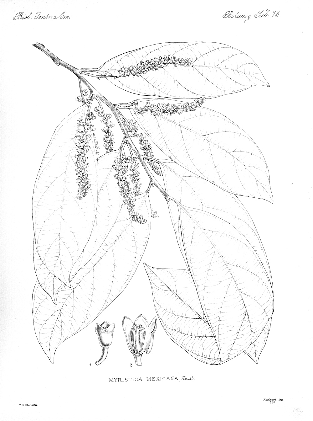 Plants,  Image number:bca_21_05_00_161