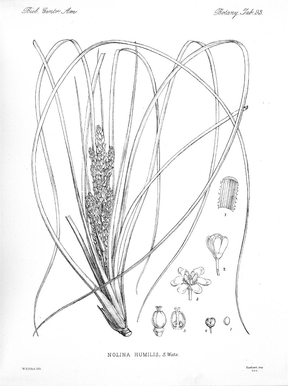 Plants,  Image number:bca_21_05_00_201