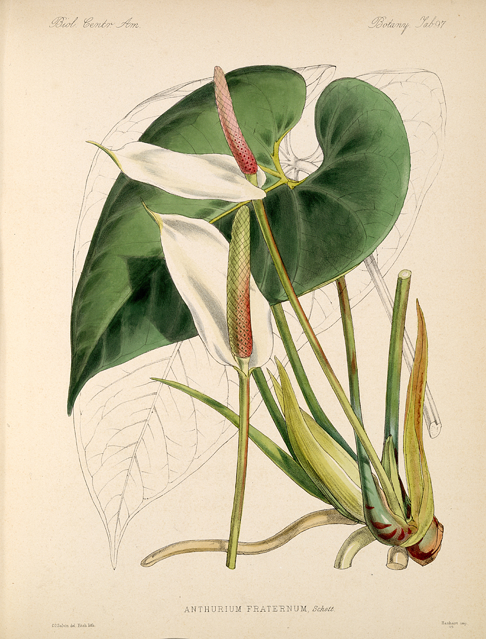 Plants,  Image number:bca_21_05_00_209